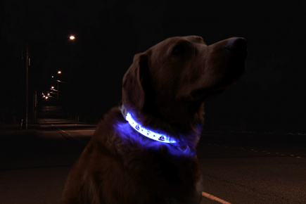 Blue Anchor Collar on Dog