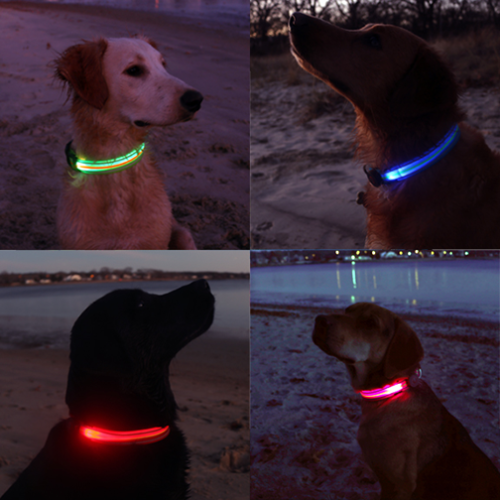 Picture of 4 different dogs wearing LED dog collars on the beach