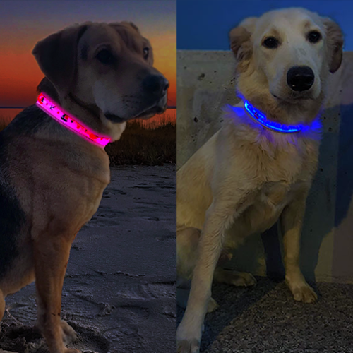 Two dogs, one on the left wearing a Pink LED dog collar lighting up and one on the right wearing a blue LED dog collar lighting up