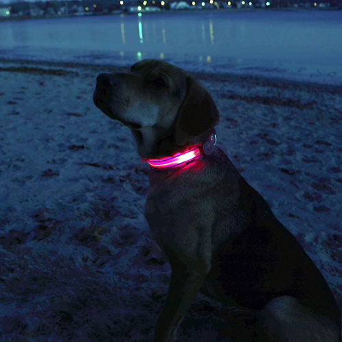 Dog sitting on beach at night wearing a pink LED dog collar lit up
